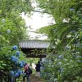 27.6.29資福寺の紫陽花