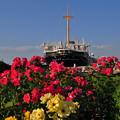 バラ咲く山下公園