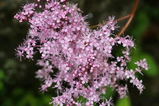 見事な小花